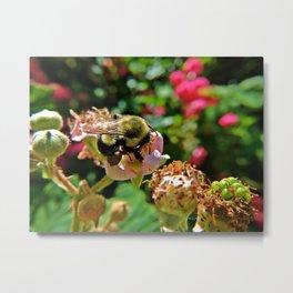 blackberry buzz Metal Print