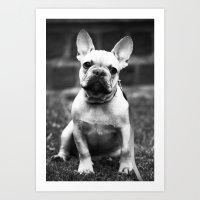 french bulldog Art Prints featuring French Bulldog by Kathleen Schulze