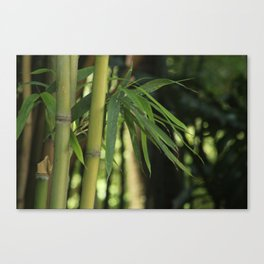 Bamboo Thicket Canvas Print
