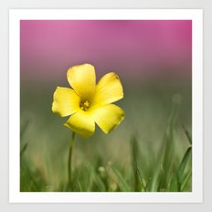 Yellow on Pink Art Print