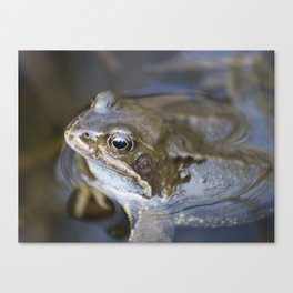 Croak the frog Canvas Print