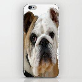 American Bulldog Background Removed iPhone Skin