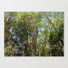 Trees in the Wild Canvas Print