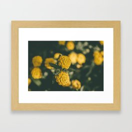 The Yellow Lantana Framed Art Print