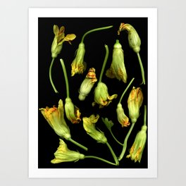 Squash Blossoms Art Print