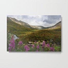 Fireweed & Fall in Alaska  Metal Print