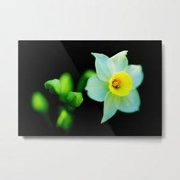 Translucent Flower - Color Version Metal Print