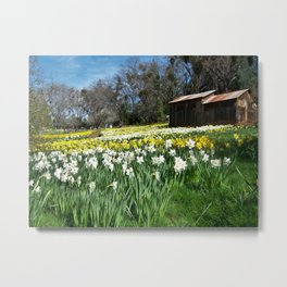Daffodils and Barn Metal Print