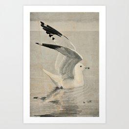 Vintage Illustration of a Seagull (1902) Art Print