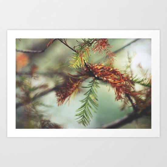 Through a Lens Art Print