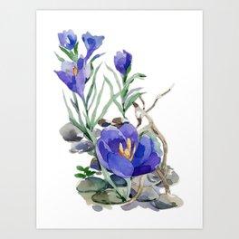Crocus in Spring Art Print