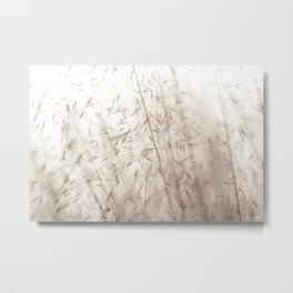 White pampas grass II Metal Print