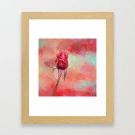 Red Rose In Spring Framed Art Print