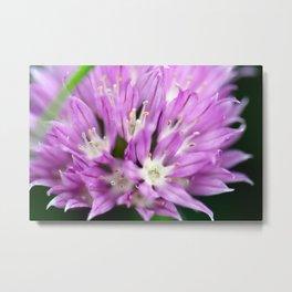 Macro Chive Blossom 4 Metal Print