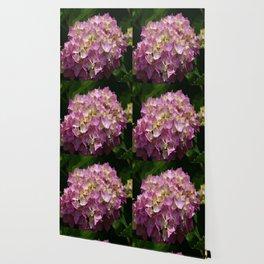 Pink Hortensia Wallpaper