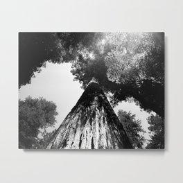 """REDWOOD - Fuji Acros 100 - 4x5"""" film Metal Print"""