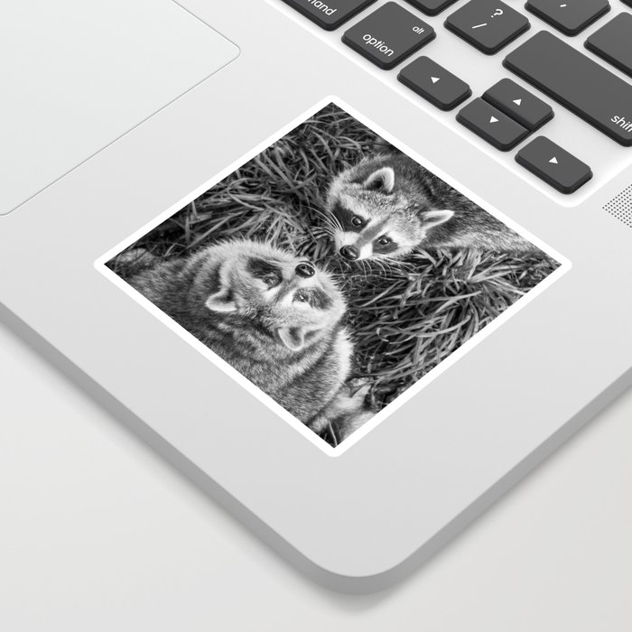 Racoon Photography | Animal Art | Wildlife | Cute | Adorable | Black and white Sticker