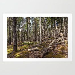 acadian woods Art Print