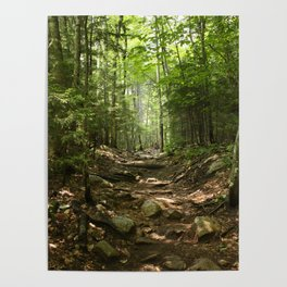 Forest Hike Poster