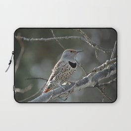 Red-shafted Northern Flicker Laptop Sleeve