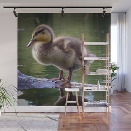 Duckling in Chocolate Caramel Wall Mural
