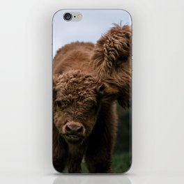 Scottish Highland Cattle Calves - Babies playing iPhone Skin