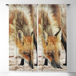 Fox Portrait Blackout Curtain
