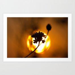 Sun hiding behind a flower 1 Art Print