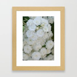 Deutzia Pure and Simple Framed Art Print