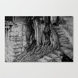 roots and stairs  Canvas Print