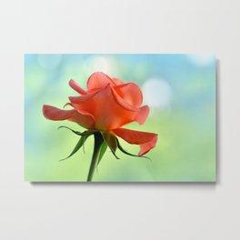 Rose 111 Metal Print