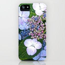 Lacecap Hydrangea iPhone Case