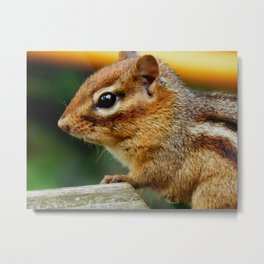 Hello, Chippy! Metal Print