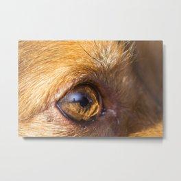 Eye details of a brown dog Metal Print