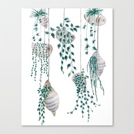 hanging plant in seashell Canvas Print
