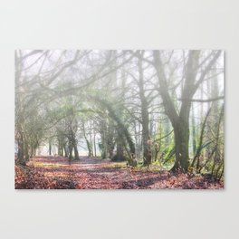 Enchanted Woodland Canvas Print