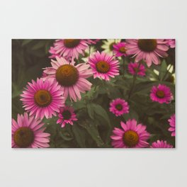 Wild Cone Flowers 2 Canvas Print