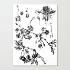 Botanical #CHERRIES Canvas Print