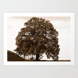 Majestic Tree - Sepia Art Print