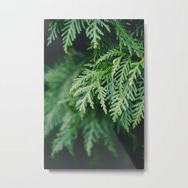 Christmas Green Metal Print