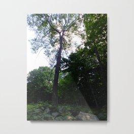 roadside greenery I Metal Print