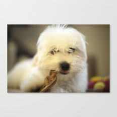 Moriarty & The Bully Stick Canvas Print