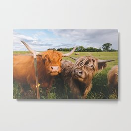 Highland Cows - Blep Metal Print