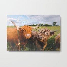 Highland Cows - Blep Metal Print