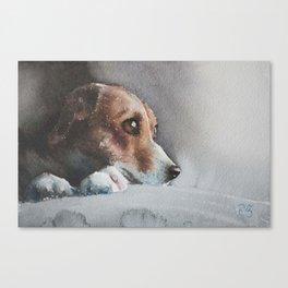 Capella the beagle Canvas Print