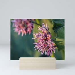 Showy Milkweed Mini Art Print