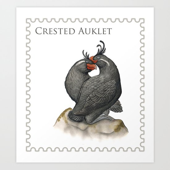 Crested Auklet (Aethia cristatella) Art Print