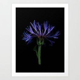 Lilac flower - 108 Art Print