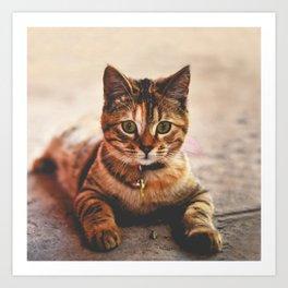 Cute Young Tabby Cat Kitten Kitty Pet Art Print