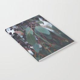 Gum Nuts Notebook